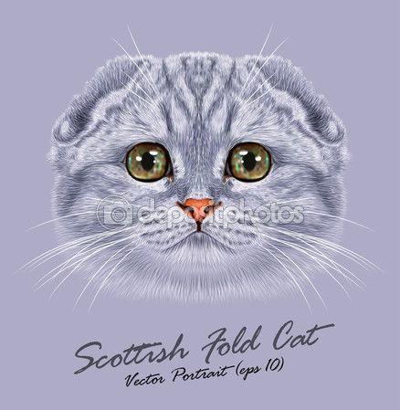 Вектор портрет Шотландская вислоухая кошка — стоковая иллюстрация #82676286
