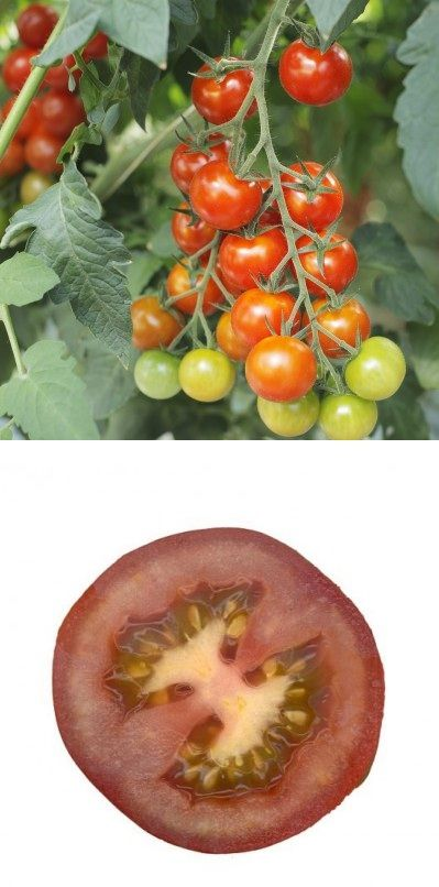 Exclusive Foods: How to Cure Tomato Blight | Learn More About Organic Gardening