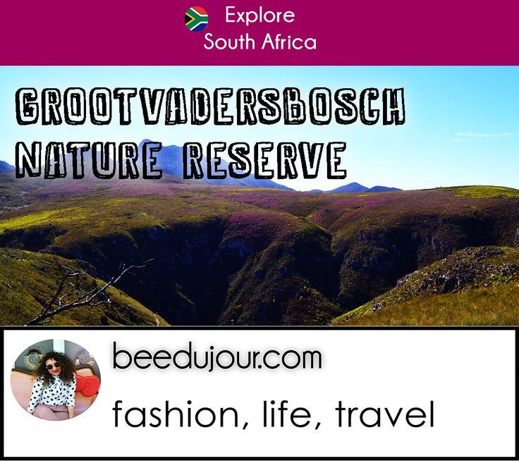 GrootVadersbosch Game Reserve: http://beedujour.com/grootvadersbosch-reservation/