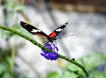 Exportacion de Mariposas