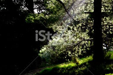 tree on dark forest sunlight Royalty Free Stock Photo