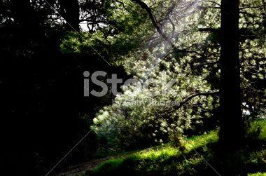 tree on dark forest sunlight Royalty Free Stock Photo