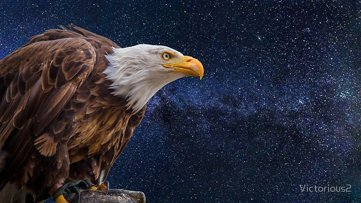 A beautiful picture of bald eagle and stars