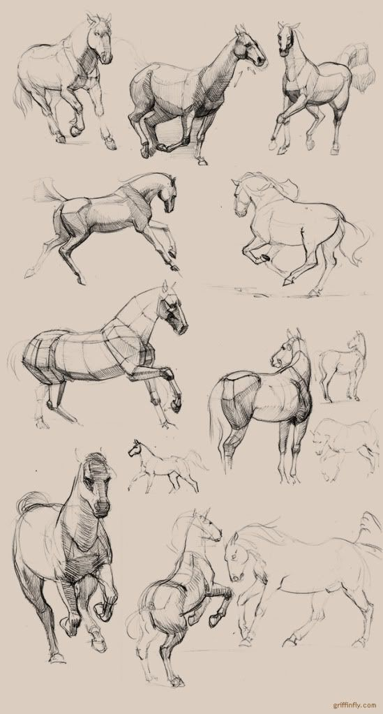 Olga griffinfly Drebas, horse studies and sketches