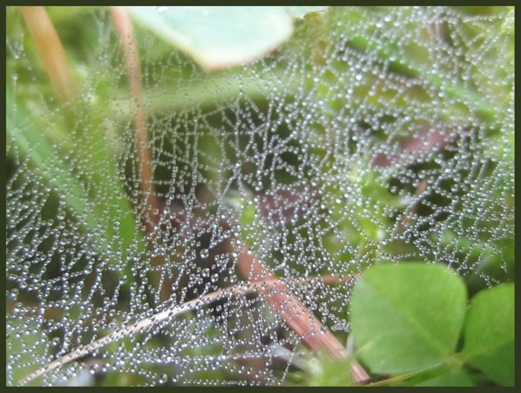 Tiny tiny spiderweb