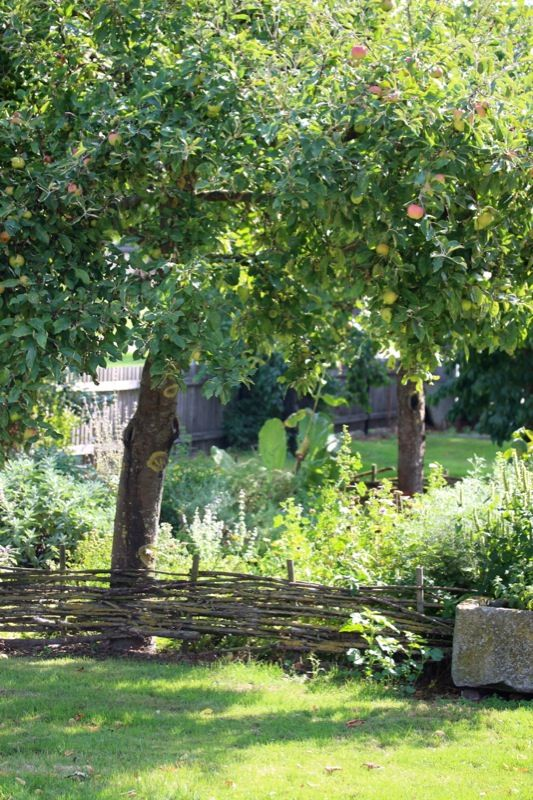 kitchen garden, fruit tree, nice rustic fence. A simple life. Habacuc 2.2.