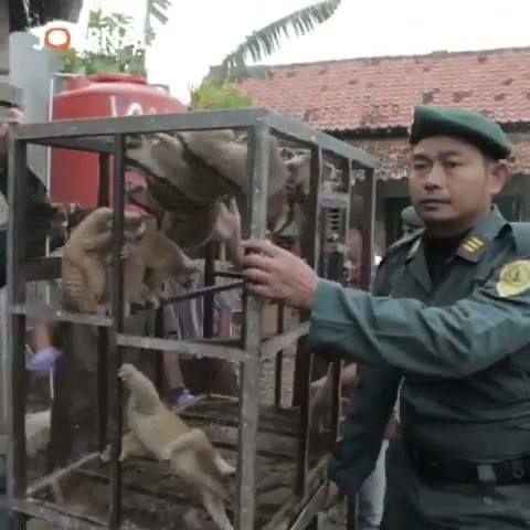 JOURNAL: Nasib Pilu Kukang di Ambang Kepunahan  Nycticebus Javanicus (Kukang Jawa) adalah satwa dilindungi yang masih marak diperdagangkan secara ilegal   #Journal #LiputanKhusus