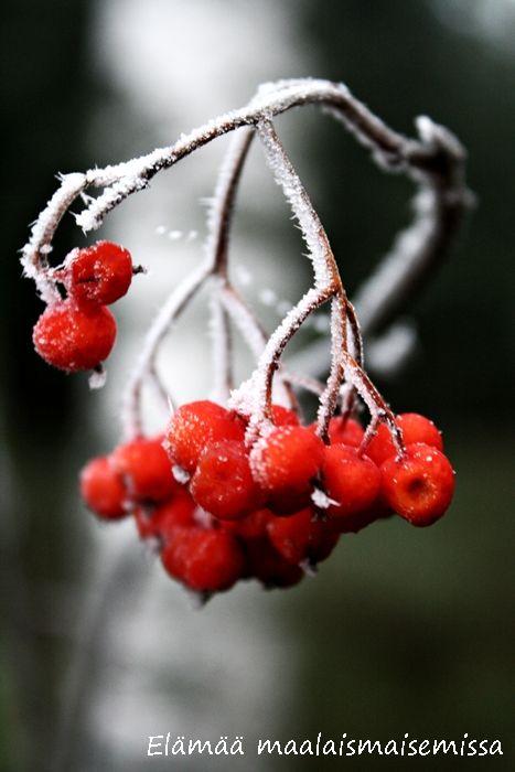 Elämää maalaismaisemissa: Luonnon kylmää taidetta