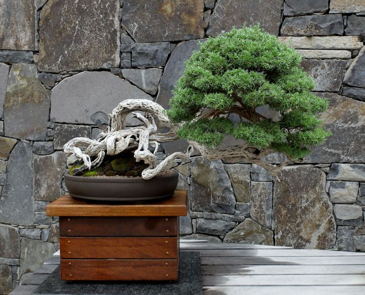 The bonsai collection at the National Arboretum in Canberra.