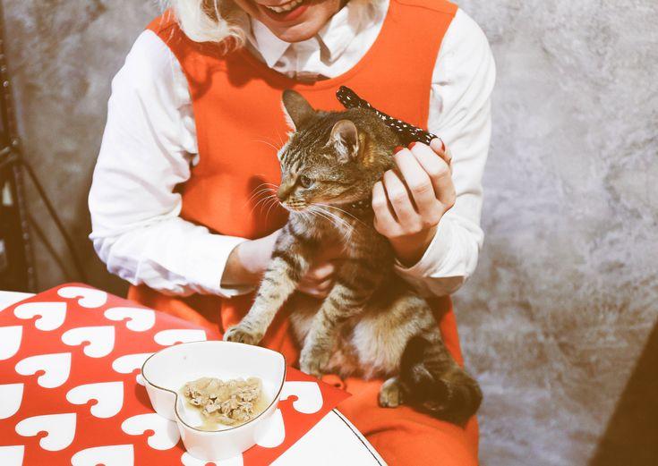 Cat Purina Gourmet San Valentine  Lucia Del Pasqua Vintage look