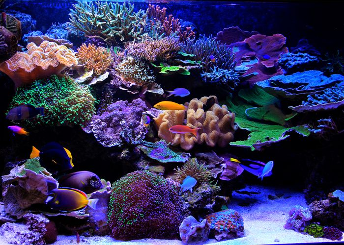 1372 besten aquariums viviariums miniature landscapes. Black Bedroom Furniture Sets. Home Design Ideas