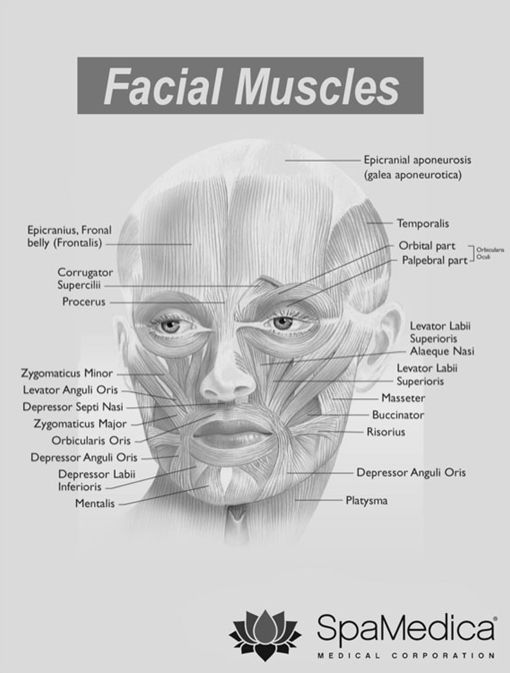 Botox Injection Sites and Facial Muscles