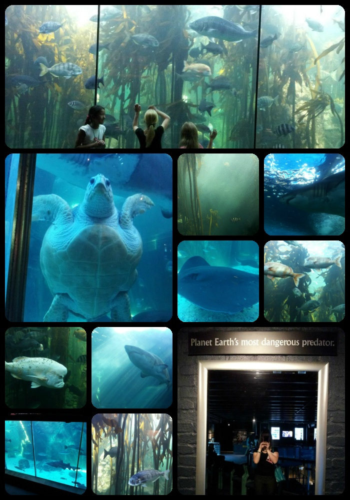 The Two Oceans Aquarium is a brilliant plan if it #rains.  And even if it doesn't.  A guilt free pleasure after a worldclass shopping spree!  The V Waterfront has something fun to do for everyone    #Seeyouthere!  http://bit.ly/ksxF0j