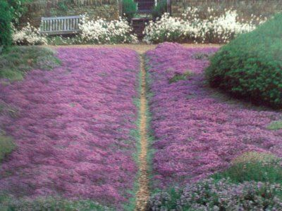 Landscape Design: The Search for an Alternative to Lawn. Thyme Garden at Home Farm, Dan Pearson