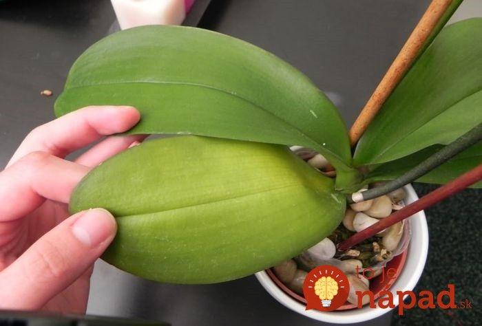 Táto surovina dokáže zachrániť orchideu a prospeje aj ostatným izbovým…