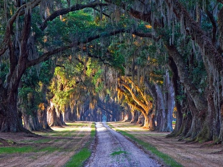 """Movie scene from """"Forest Gump""""...The road where Forrest was chased in a pickup truck by high school bullies is located at 3547 Combahee Road, Yemassee, South Carolina—though it leads to a private property, so it's probably best not to recreate the famous chase-scene on your own."""