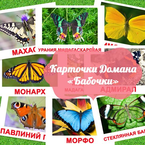 Бабочки картинки с названием для детей, карточки по методике Глена Домана «Вундеркинд с пеленок»