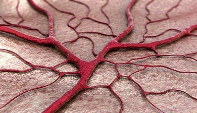 Bloedaders beschermd door collageen - FemNa40