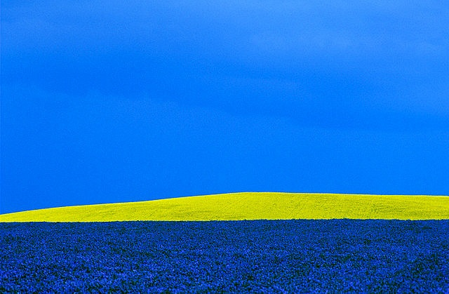 Flax and canola fields outside Portage la Prairie, Manitoba.