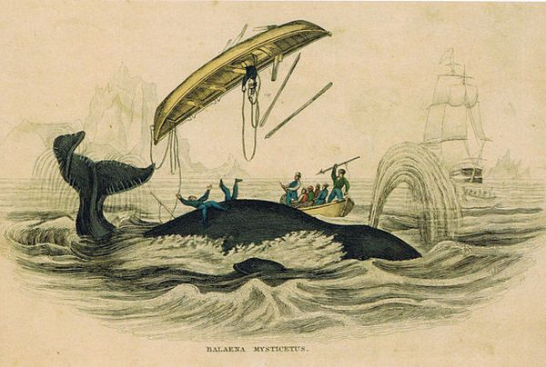 OBJECTS OF INTRIGUE: THE DRAWING OF THE WHALE THAT BECAME MOBY DICK