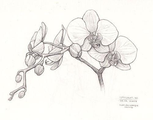 Orchid sketch by redmeg8, via Flickr