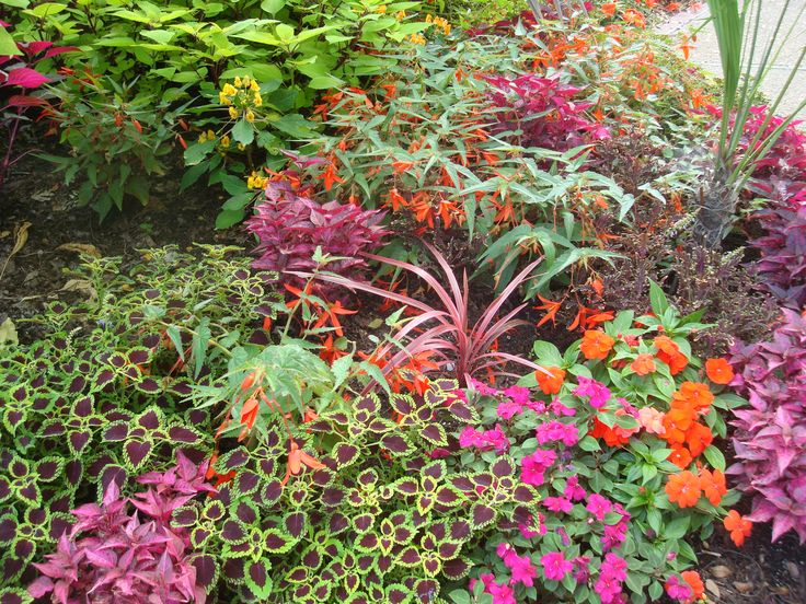 368 best images about coleus on pinterest scarlet fall for Agencement container