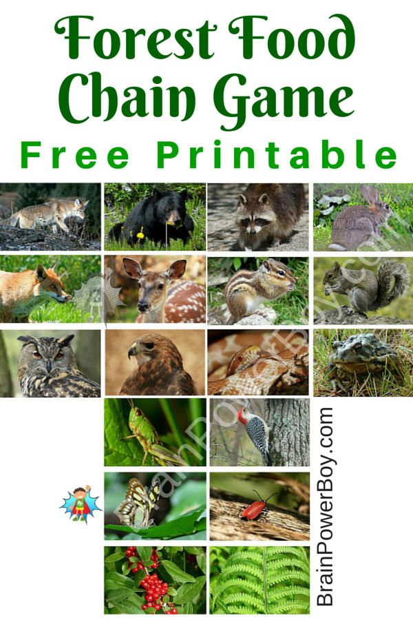 Free printable games for kids: forest food chain game. This game's images are beautiful and it is easy to play. Print it out today.