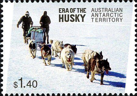 Stamp: Husky (Canis lupus familiaris) Team (Australian Antarctic Territory (AAT)) (Era of the husky) Mi:AQ 225,Yt:AQ 222