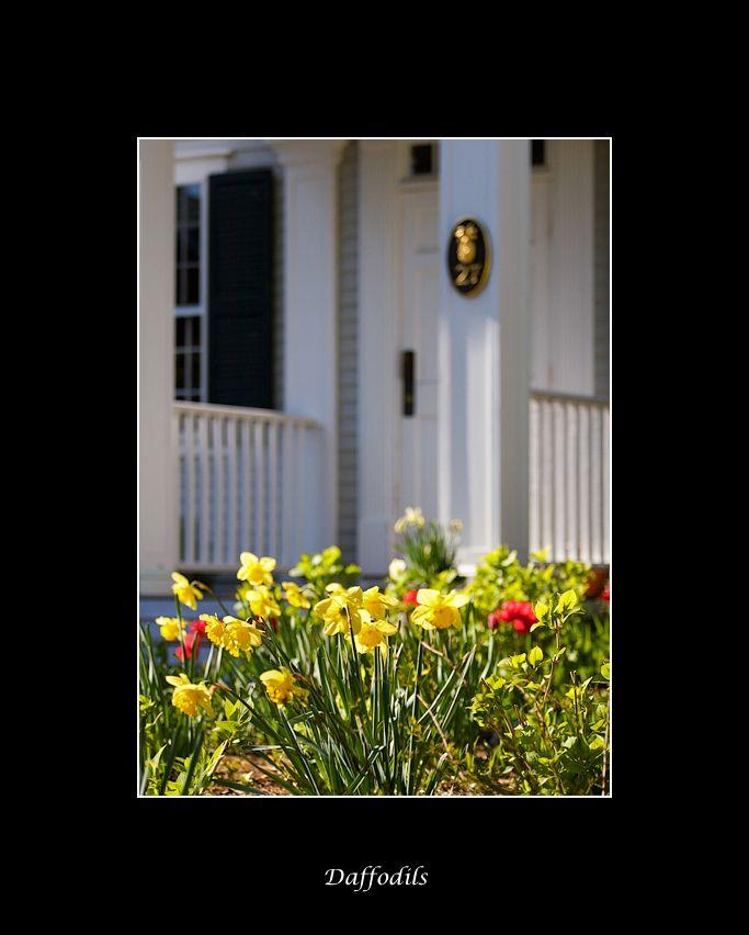 Cape Cod Spring: 58 Best Springtime Images On Pinterest
