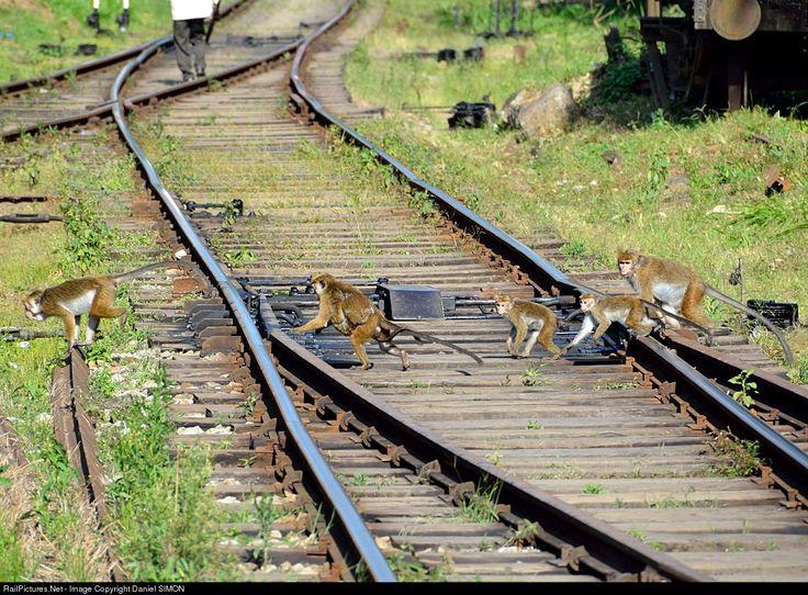 RailPictures.Net Photo: Unknown Sri Lanka Railways Unknown at Kadugannawa, Sri Lanka by Daniel SIMON