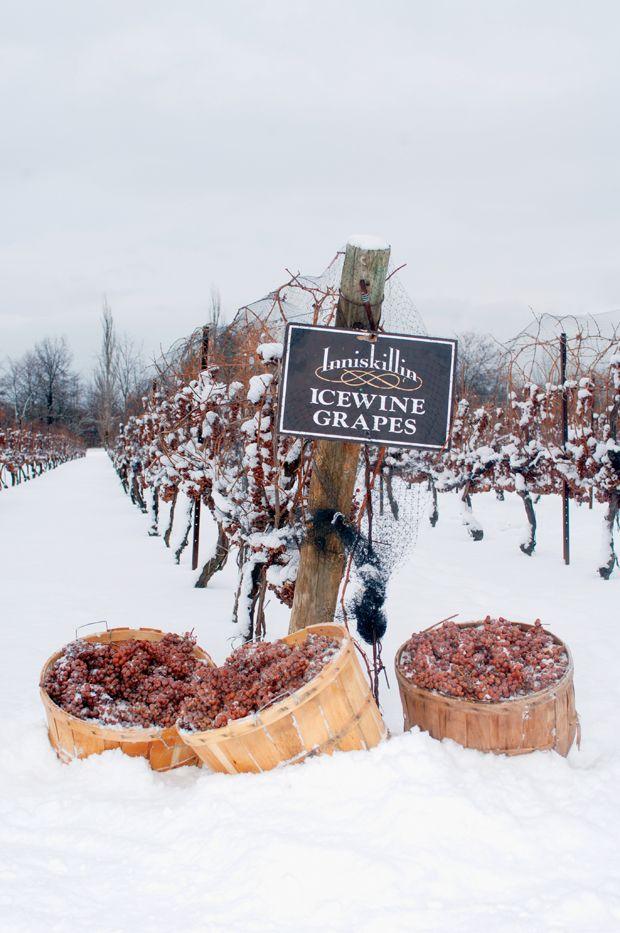 *Inniskillin Ice Wine Vineyard.   Been here twice in Canada.  Ice wine is very sweet.  Like a dessert.