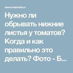Нужно ли обрывать нижние листья у томатов? Когда и как правильно это делать? Фото - Ботаничка.ru