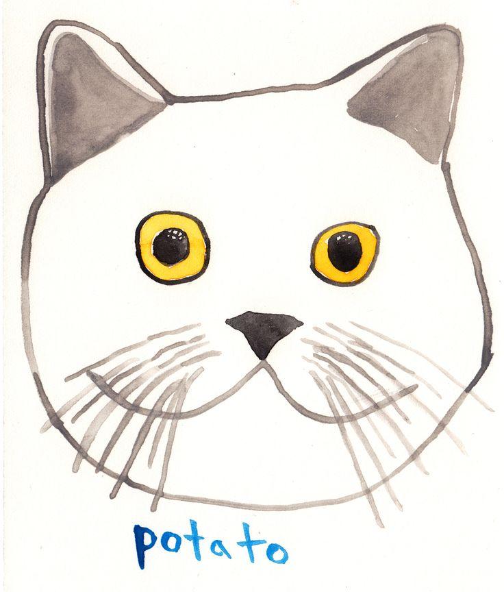 Todd Selby katten