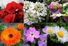 As 5 melhores flores em bolbo para plantar no Outono                                                                                                                                                                                 Mais
