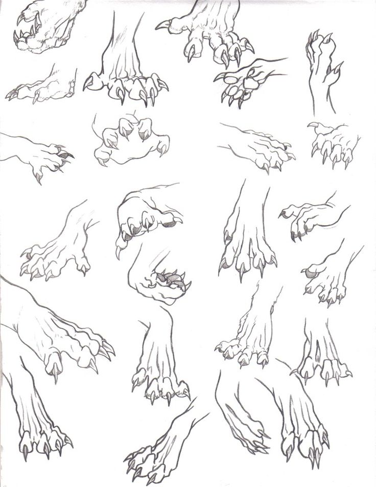 93 best [Anatomy] Feral, canine, references, anthropomorphic, images ...