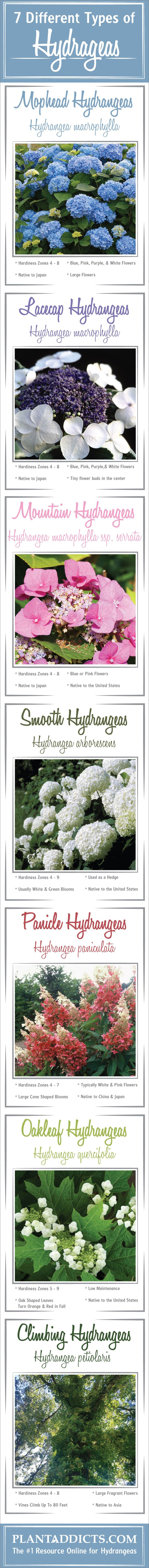 The Complete Guide to All Hydrangea Types | Plant Addicts