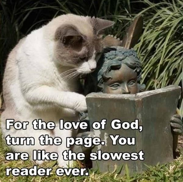 The slowest reader ever....Funny Kitty, Cats Humor, Funny Cats, Book, Make Me Laugh, Too Funny, Funny Animal, So Funny, Silly Cat