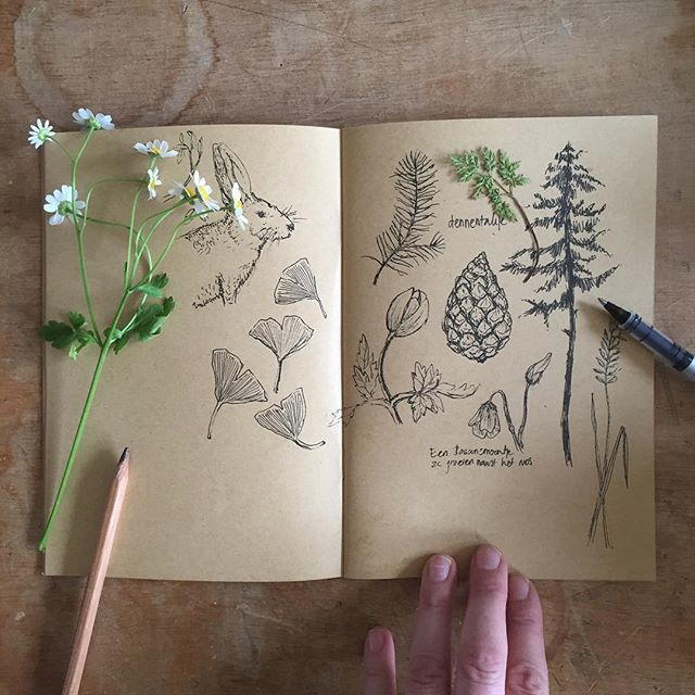Drawings after a walk in the woods #sketchbook #schetsboek #nature #botanical #woods #bos #illustratie #kamille #terschelling #hike