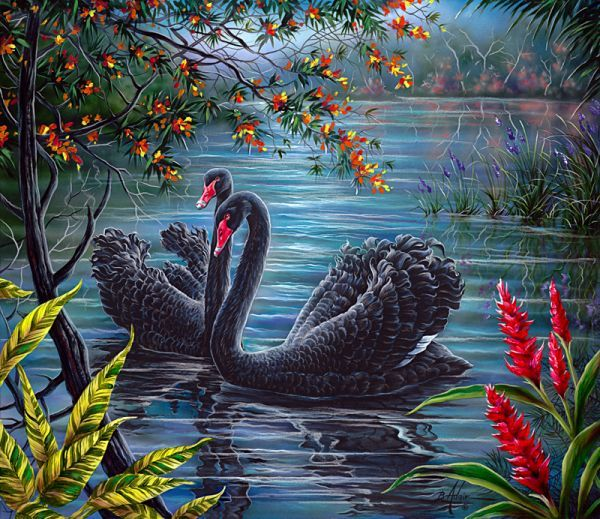 Black Swans - Bill Adair - Art for Conservation.