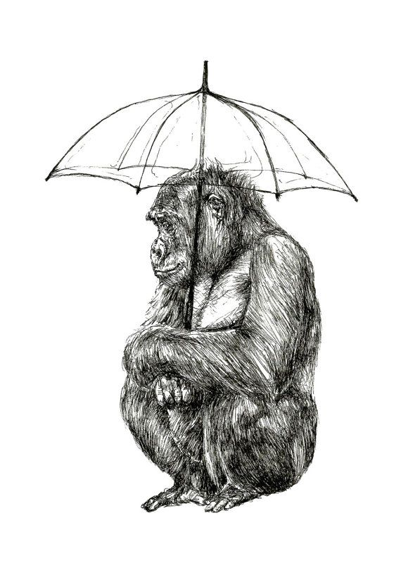 monkey in the rain, 'watching the rain',digital print from original black pen drawing, A3 16.5 x 11.7 in