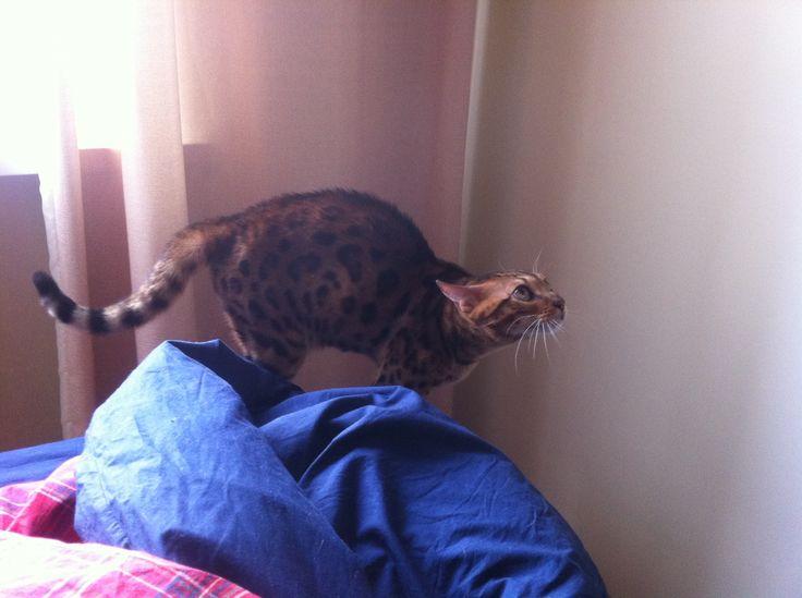 возбуждение коти
