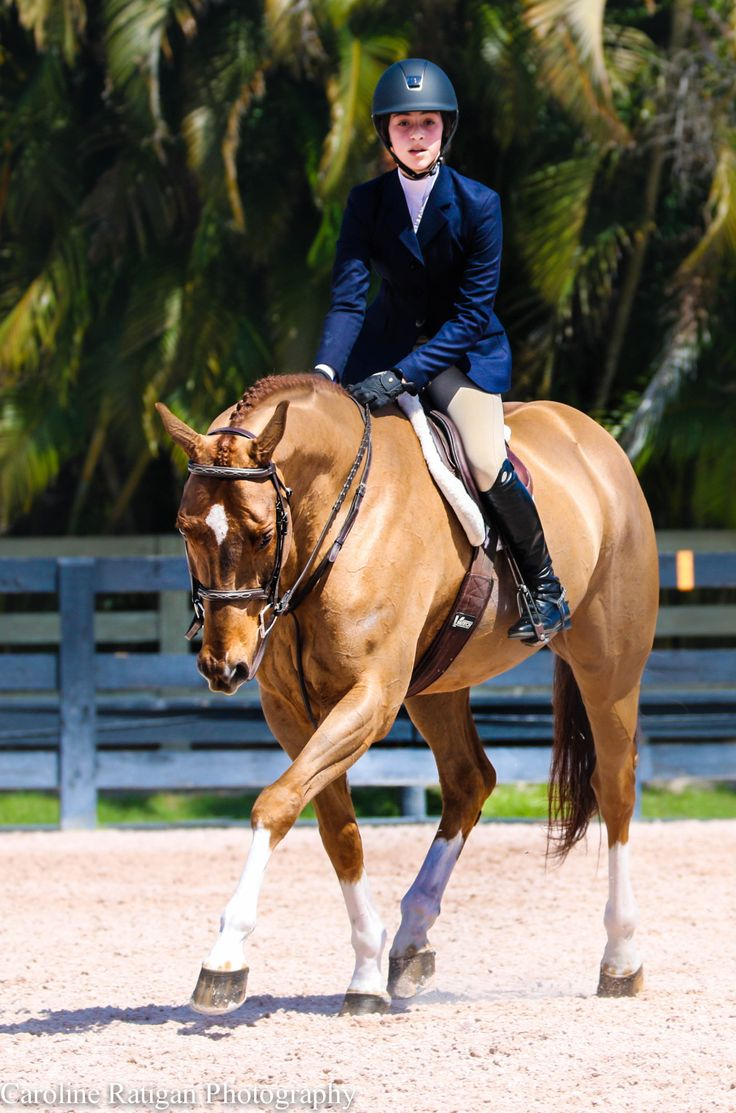 best images about hunters hunters dressage and horse neigh wef 2015