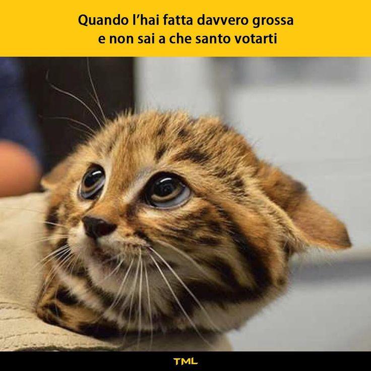 """""""Mi piace"""": 34 mila, commenti: 112 - Tua madre è Leggenda (@tmlplanet) su Instagram: """"Momenti difficili. (by @il_toki) #tmlplanet #guaio #errore #danno #ragazzi #ragazze"""""""