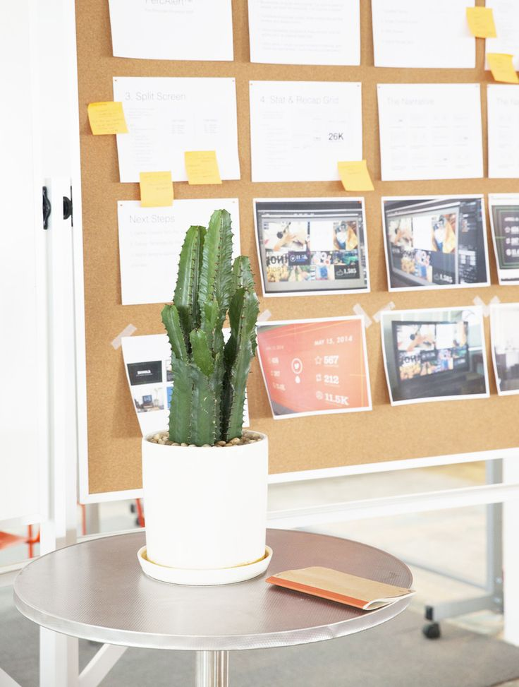 Table Top Picks: 8 Plants For Your Office Life X The Sill