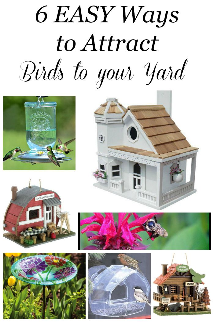 Attracting songbirds to your yard is  a fabulous way to minimize insect pests, enjoy their songs and colors and teach your children the beauty of nature! 3 essential things are necessary to attract birds: food, water and shelter. Here are 6 EASY ways to attract birds to your yard! #spon