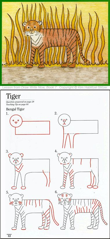 how to draw a cartoon tiger for kids