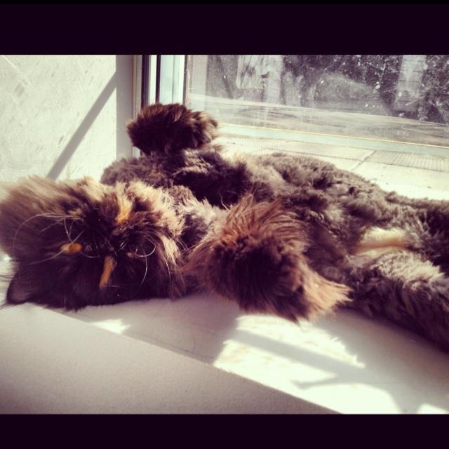 My lazy bum sunbathing