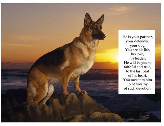 German Shepherd Dog With Poem On 16