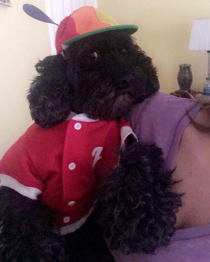 Happy Halloween!  - - - - #halloween #dogsofinstagram #instapuppy #instadog #cockerspaniel #poodle #philadelphia #phillies #baseball #rescuedogsofinstagram #pupsofinstagram #puppiesofinstagram #instapuppy #herman #rescuedog #animals #dog #dogs_of_instagram #ilovedogs #lovedogs #instagramdogs