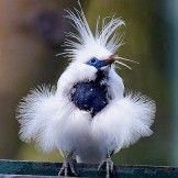 Very Beautiful Bird